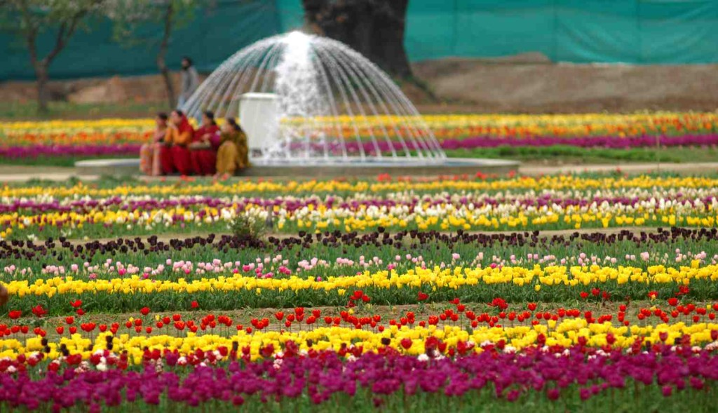 Design inspiration in nature- Tulip fields